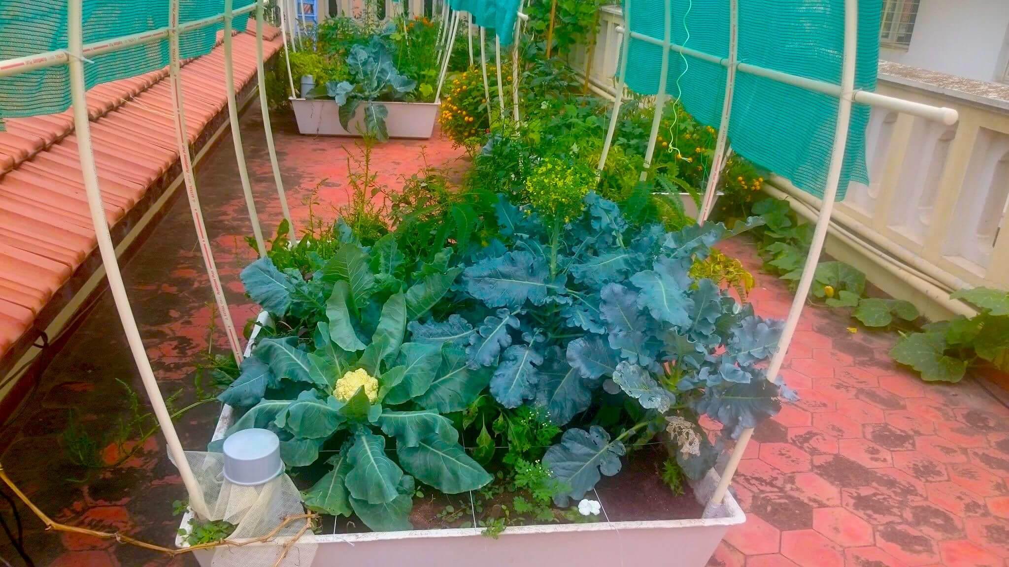 Kitchen Garden Kit Smart Garden Single Complete 24 Sq Ft Self Watering Organic
