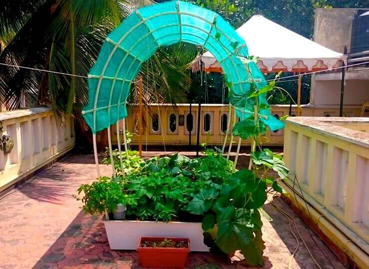 Complete Self Watering Terrace Garden Kits To Grow Your Own Organic Veggies.