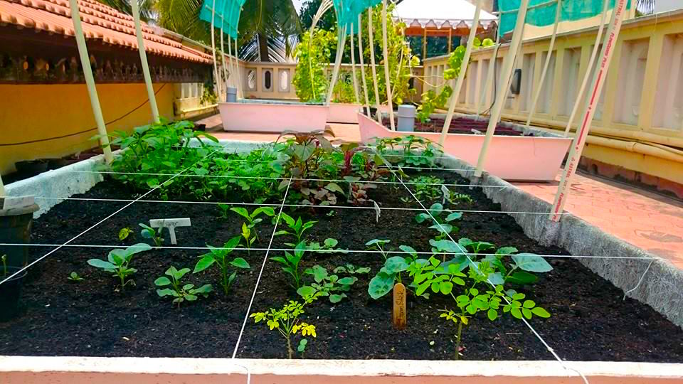 Bangalore terrace vegetable garden garden ftempo for Terrace vegetable garden india