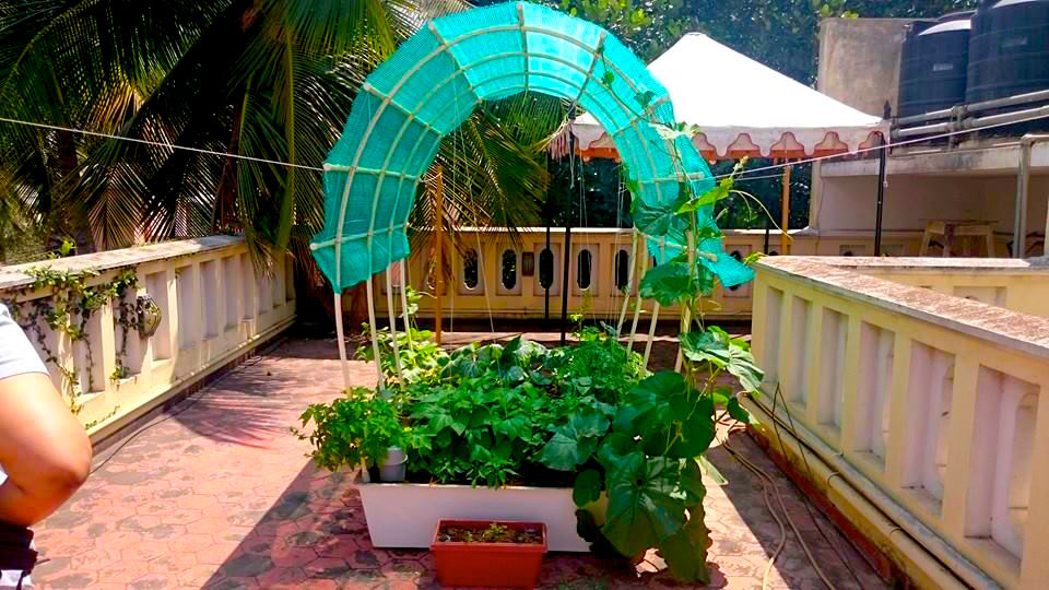 Smart gardens complete kits for organic terrace kitchen garden in india load more solutioingenieria Images