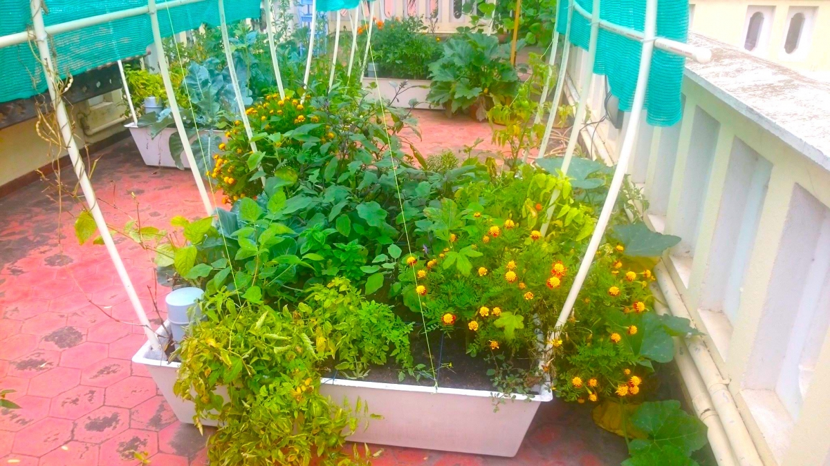Smart gardens complete kits for organic terrace kitchen garden in india pictures from our customers gardens solutioingenieria Images